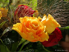 Flower of the Week (Sockenhummel) Tags: roses rose fuji finepix fujifilm rosen blume x20 bunchofflowers floweroftheweek blumenstrauss fujix20