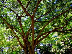 Honolulu, Hawai'i - October 2014 - 26 (Jimmy - Home now) Tags: usa hawaii waterfront pacific waikiki oahu pacificocean honolulu waikikibeach pacificrim pacifics