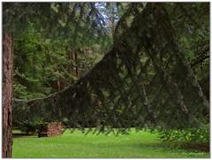 GEOMETRIE NATURALI ! - Géométries naturelles ! - Natural geometries ! (eugeniobld... intermittente) Tags: verde canon explorer bosco abeti baldaccieugenio