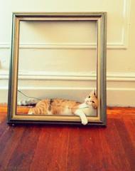 cat samsung smartphone galaxy frame nexus iphoneography... (Photo: XuKin on Flickr)
