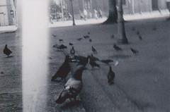 Entre duas e cinco da tarde (ONVERKLAARBARE) Tags: dog white black bird film k branco noir 15 delta preto e cachorro praa filme schwarzweiss 3200 blanc ilford pombos 212 passaros analogic analgico zenet