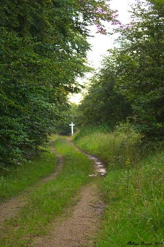 Forêt domaniale de Compiègne