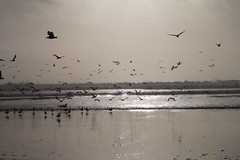 Oregon Coast: Short Sands Beach (eliduke) Tags: oregon shortsands shortsandsbeach