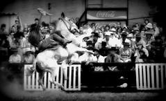 El overo fiero (Eduardo Amorim) Tags: horses horse southamerica criollo caballo uruguay cheval caballos cavalos prado montevideo pferde cavalli cavallo gauchos pferd chevaux gaucho  amricadosul montevidu uruguai gacho amriquedusud  gachos  suramrica amricadelsur sdamerika crioulo caballoscriollos criollos jineteada  americadelsud gineteada crioulos cavalocrioulo americameridionale caballocriollo campeiros campeiro eduardoamorim cavaloscrioulos pasomolinosudamrica cuandopuedasleeladescripcin
