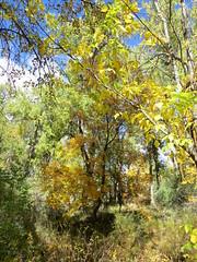 Riverwalk (Patricia Henschen) Tags: arkansasriver canoncitycolorado riverwalk usroute50