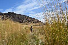 Chunlin through the Grass (Sotosoroto) Tags: hiking bankslake grandcoulee dayhike barkercanyon