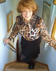Comin' At Ya (Laurette Victoria) Tags: wisconsin auburn mini animalprint laurette laurettevictoria
