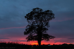 Greasby sunset (Paul-Farrell) Tags: sunset tree silhouette canon wirral greasby 24105mm 70d paulfarrell fagsy63