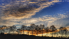 Cloud parade (RainerSchuetz) Tags: clouds trees sunset sundown nightfall silhouette birches rowoftrees