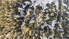 over and above the mighty pines (sufined) Tags: drone artistic flying dji phantom4pro kpk mushkpuri sufined pakistan mountain mountains