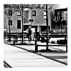 ghost dog (japanese forms) Tags: ©japaneseforms2017 ボケ ボケ味 モノクロ 日本フォーム 黒と白 bw blackwhite blackandwhite blancoynegro ghostdog jimjarmusch random schwarzweis square squareformat strasenfotografie straatfotografie streetphotography vlaanderen zwartwit pun wortspiel woordspelling dog hund honde