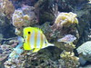 00734927 Aquarium Berlin 1 - 2017 (golli43) Tags: aquariumberlin zoo fische krokodile quallen wasser wasserpflanzen amphibien insekten unterwasserwelt