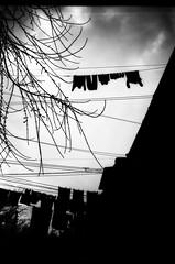(20/21) Project ''Lviv overhead'' (nerapavlo) Tags: filmisnotdead lvivoverhead lviv плівка city lwow lemberg чб lvov чбфото leopolis ukraine львів україна bnw monochrom noir film filmphotography analog analogphotography 35mm 35mmfilm kodak project monochrome analogue kodakfilm urban bw sky lines