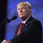 From flickr.com: Donald Trump {MID-70984}