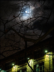 20170310-016 (sulamith.sallmann) Tags: pflanzen wetter ast berlin deutschland fullmoon germany mitte mond nacht nachtaufnahme nachthimmel nachts night nightshot plants vollmond weather wedding äste deu sulamithsallmann