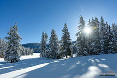 April Snow (kevin-palmer) Tags: april snow snowy spring cold snowfall clear sunny blue sky nikond750 tamron2470mmf28 bighornmountains wyoming early morning white sun shadows snowshoeing bighornnationalforest trees sunshine muttmeadows