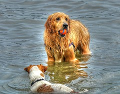 Jealousy (swong95765) Tags: dogs water wet play ownership ball canines jealous desire want