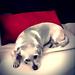 Sad Dog's Glamour shot
