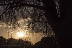 Hay un amanecer y una puesta de sol todos los días. Tú puedes elegir estar ahí o no / There's a sunrise and a sunset every day. You can choose to be there or not. (Antonio López-Torres Sánchez) Tags: árbol tree puestadesol atardecer sunset casasimarro cuenca lamancha castillalamancha cielo sky sol sun libisosanorum