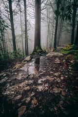 Foggy trail (Jfoose03) Tags: blackwaterfalls woods trees westvirginia foggy moody