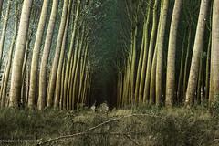 un tunnel naturale (paolotrapella) Tags: alberi prospettiva tunnel natura canon tamron 70300vc