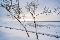冬の知床 03 (tomomega) Tags: 知床 北海道 日本 japan 流氷 driftice 雪 snow