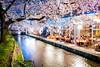 sakura '17 - cherry blossoms #7 (Kiyamachi, Kyoto) (Marser) Tags: xt10 fuji raw lightroom japan kyoto sanjo kiyamachi river restaurant flower cherry sakura longexposure nightview 京都 三条 木屋町 高瀬川 桜