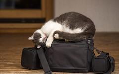 kittens (40) (Vlado Ferenčić) Tags: animals animalplanet kitty kittens kittysuperstar catsdogs cats zagorje hrvatska hrvatskozagorje nikond600 nikkor8020028