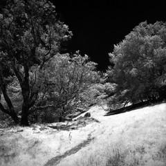 Journey into Darkness (Scott Holcomb) Tags: mounttamalpaisstatepark marin california hasselblad500c carlzeissdistagon14f50mmtlens hoyainfraredr72ø67filter 50mmto67mmhasselbladfilteradapter konicainfrared750film blackwhiteinfrared 6x6 120film mediumformat epsonperfectionv600 photoshopdigitalization