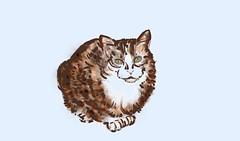 White and red (Isaszas) Tags: clipart digitalpainting peinturenumérique painter cat chat sketch esquisse dessin croquis