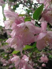 留园 Jardin Liu à Suzhou - China (Baptiste J.) Tags: china suzhou jardin 留园 liu lingering garden