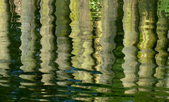 Waterlogged for FFfriday (jeansmachines24) Tags: woodenfence pond reflection watercolours wavy movement veins blue green plants verticals horizontalshadowlines clyne march2017 contrast