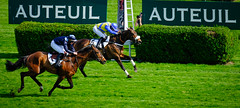 GAF photo-2.jpg (GAF photo) Tags: auteuil courseshippiques