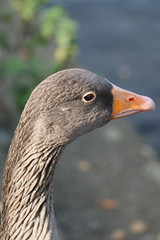 256 (AO'Brien) Tags: arklow wicklow autumn birds
