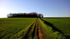 Brianzashire (Felson.) Tags: brianza fields grass green campi erba verde cielo sky blu blue panorama landscape vastness sentiero track brianzashire italy trees alberi songdeadfoxcourtneybarnett path