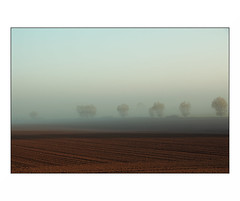 "(""Que la bête meure"") Tags: morning matin brouillard fog trees terre champ field land"
