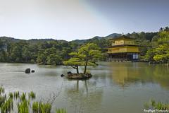 IMGP3121 (roughlegged) Tags: photography apsc pentax k3ii japan kyoto lake trees park goldenpavillion kinkakuji travel