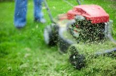 Bahçenizdeki çimler uçak yakıtı olarak kullanılabilecek (Teknoformat) Tags: bilim biofuel bioyakıt çimen clostridium decane fosil ghentuniversity haber jetyakıtı petrol