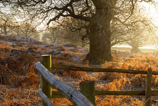 Bradgate Wood on a Frosty Morning