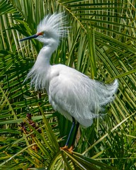 White Knight (beachpeepsrus) Tags: birds beach color palms alamitosbay longbeachcalifornia longbeachgranprix l