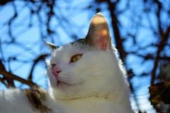 Moritz... HSS 😊 (martinap.1) Tags: katze cat nikond3300 sigma105mmmacro makro pet haustier sliderssunday hss 7dwf
