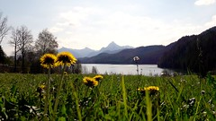 Blick auf den Weißensee (anitalemmert) Tags: weisensee allgäu bayern alpen alps bavaria see lake mobile samsung mountain berge panorama säulingblick säuling landschaft landscape