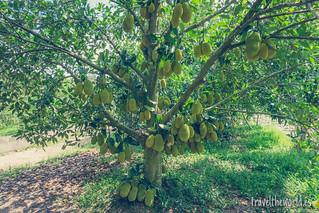 Taller fruta