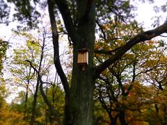 (Dutch Girl in London) Tags: park autumn trees fall leaves forest miniature sweden sverige effect indiansummer goteborg zweden gothenborg