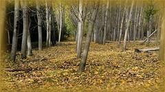 ... las grandes alamedas ... (jose luis naussa (2,5 millones . )) Tags: españa otoño χρώματα φθινόπωρο coloresotoñales saariysqualitypictures bestcapturesaoi