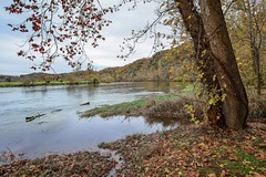 The River (Barilla Kay) Tags: trees leaves river autumncolors nikond800