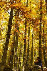 Reflexiones de otono 2 (jgarciamoreno) Tags: hojas paz descansar otoo pensar ocre castaar reflexionar