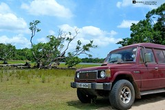 Wildlife refuge pajero