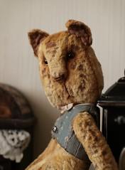 Apelsin3 (aurikka) Tags: work teddy teddybear