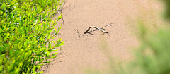 (juliopolito) Tags: ocean travel light sea wild panorama orange plants color green beach southamerica nature argentina grass yellow america botanical iso100 sand flora buenosaires nikon lab warm exposure raw peace dof natural couleurs country perspective ground nopeople highlights atlantic sharp depthoffield arbres greens lonelyplanet organic rough unreal yellows dust overexposure 70300mm tones bushes imaginary hdr couleur vegetal peacefulness sandblast lightroom quietly sharpness provinciadebuenosaires quequen fromthefloor manycolors labcolor multichannel necochea rainless movingtrees afsvrzoomnikkor70300mmf4556gifed panoramicstitching bokehpanorama brenizermethod portquequen